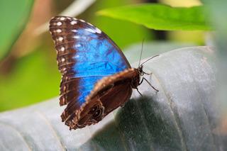 blue-butterfly-11284647432cOrN.jpg